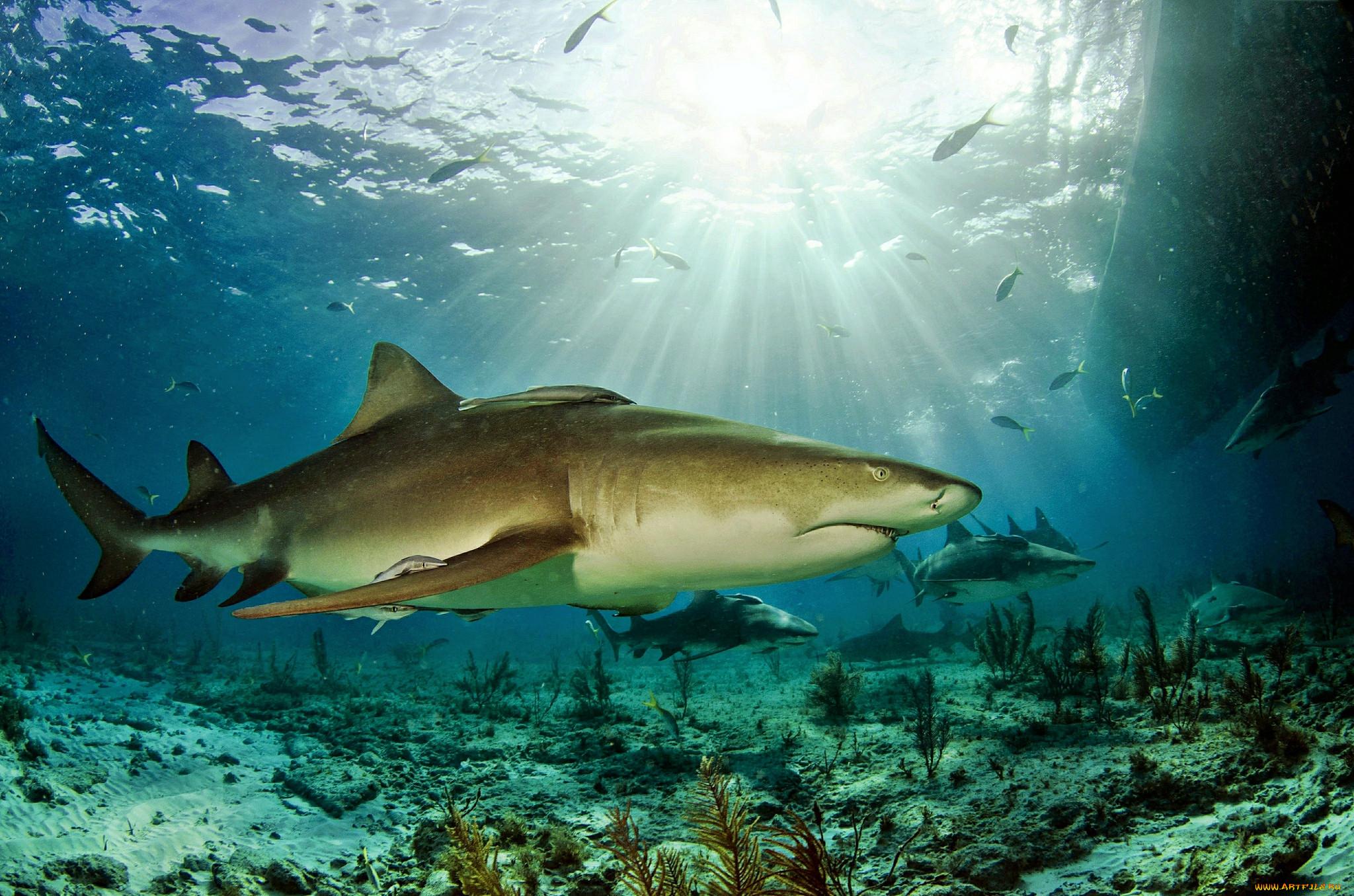 Картинки подводный мир океана акула